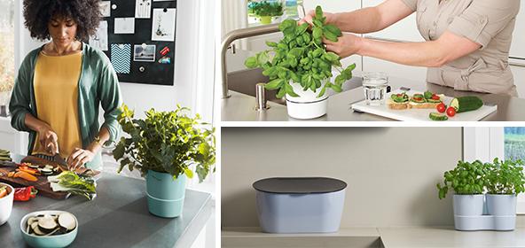 les herbes aromatiques en cuisine interesting plantes aromatiques cuisine et herbes faciles. Black Bedroom Furniture Sets. Home Design Ideas